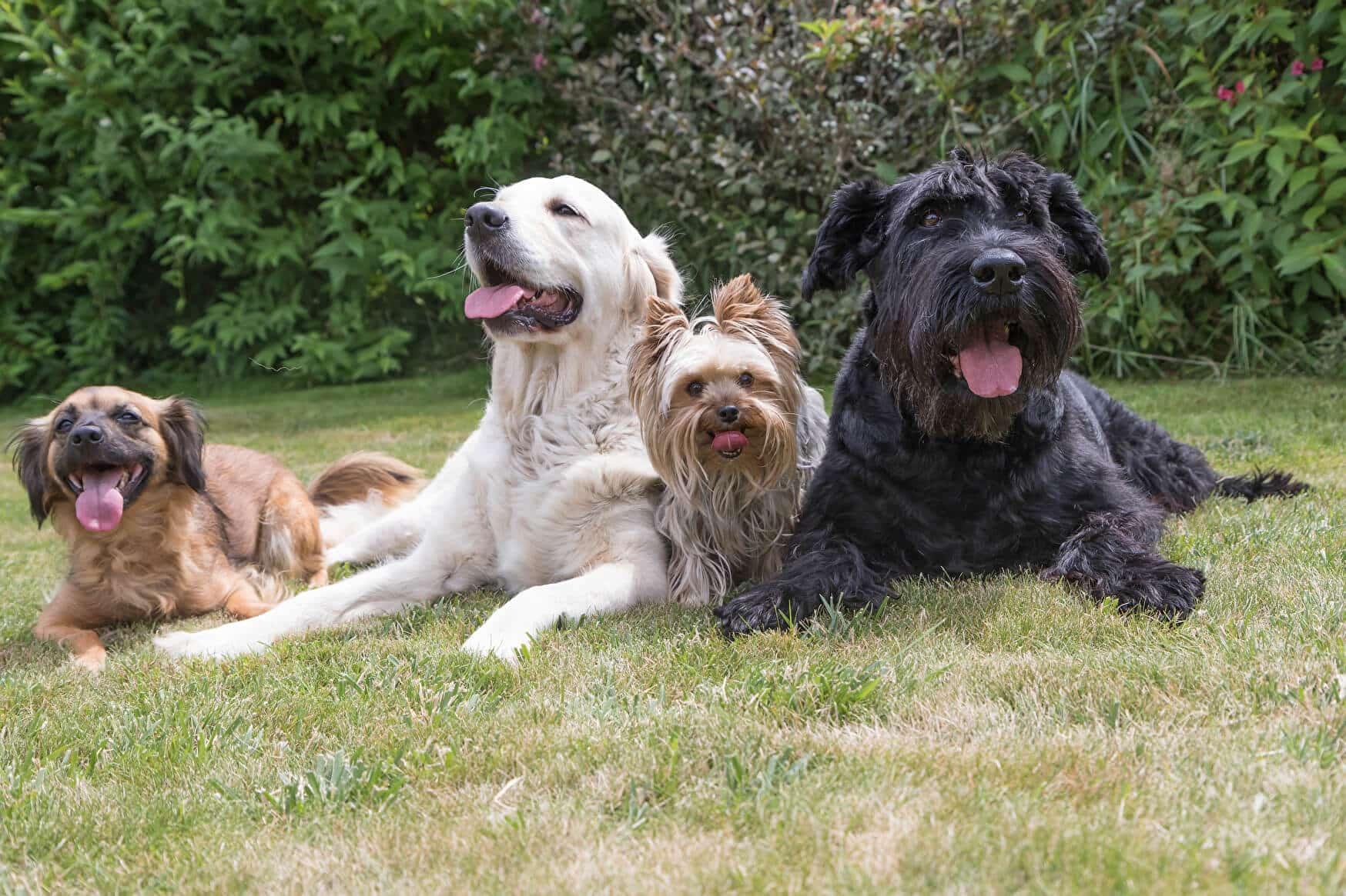 Hundeführerschein Glossar