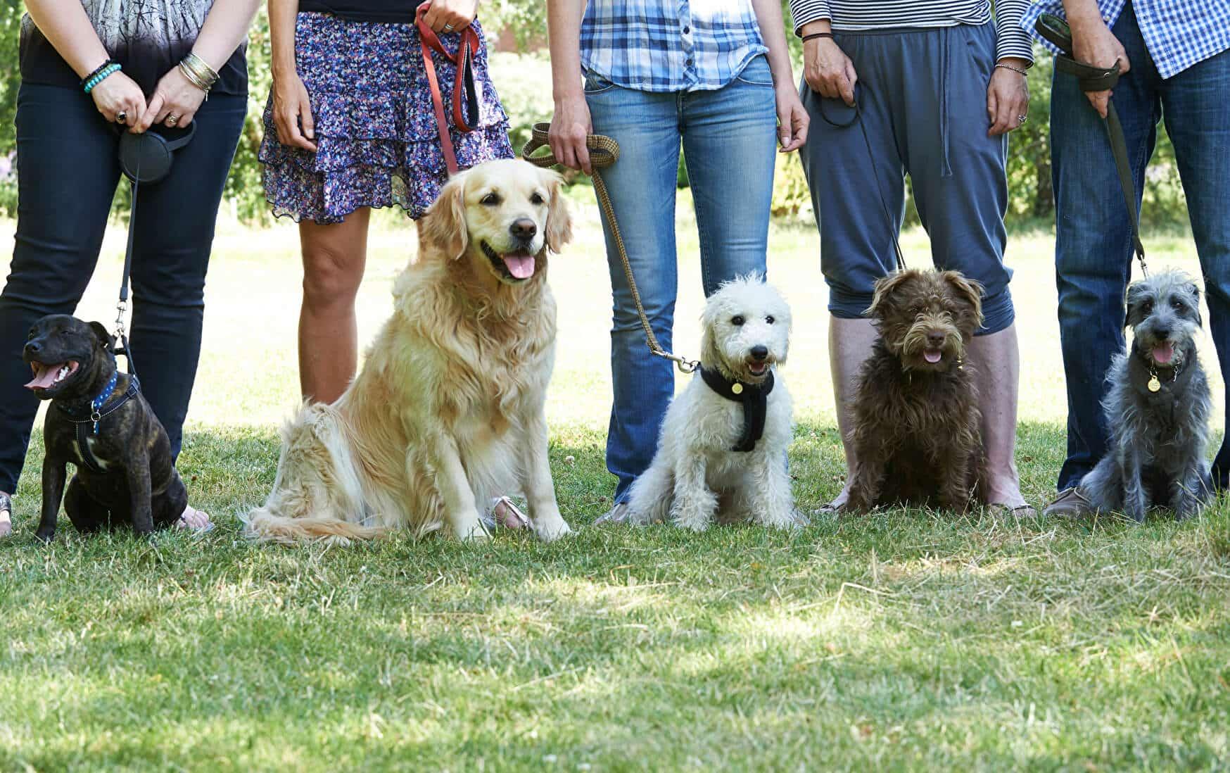 Hundeführerschein Kosten