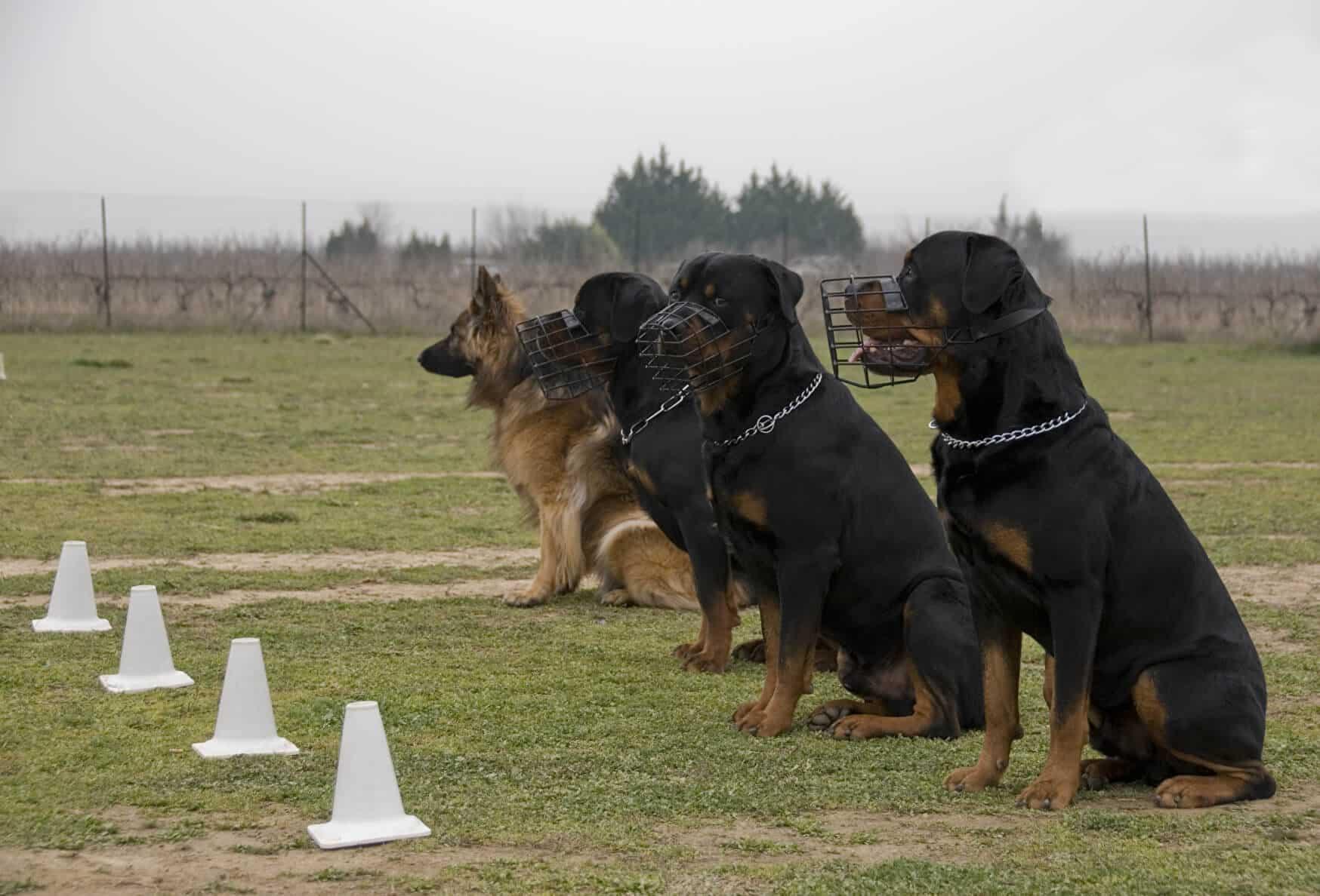 Listenhunde Kampfhunde 2020 Hundefuhrerschein De